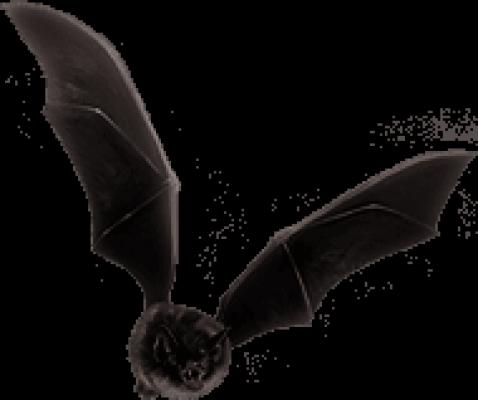 蝙蝠.png