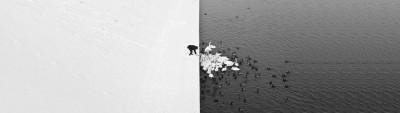 ducks-1413790.jpg